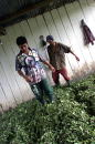 Two men process coca leaves to make cocaine base June 27 2002 in Colombia The Caguan region is one of the biggest producers of coca in Colombia where...