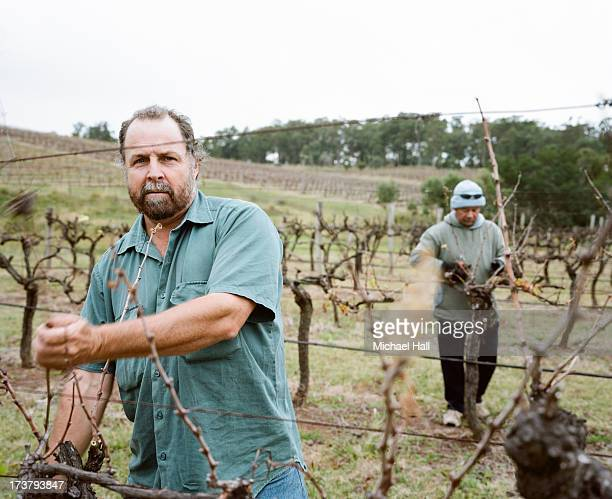 Two men pruning grape vines
