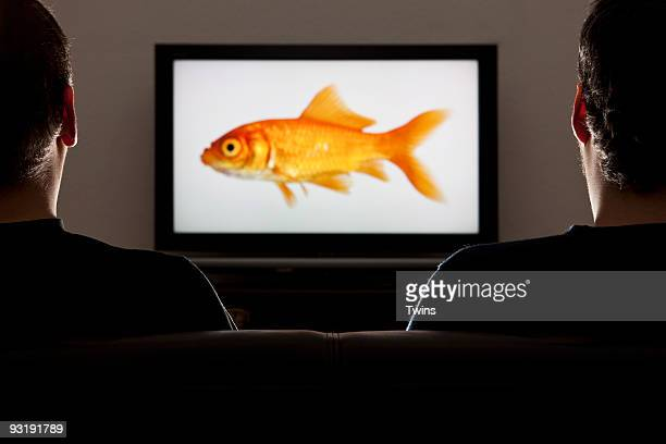 Two men watching TV, rear view