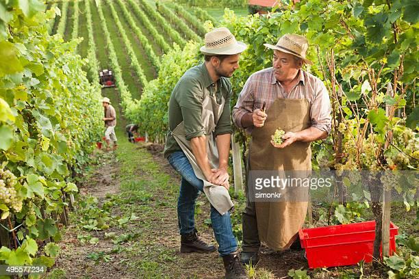Deux hommes travaillant dans un vignoble