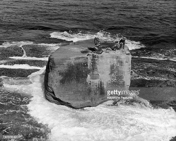 Two mermaid sculptures by Lyall Randolph atop the Ben Buckler rock off North Bondi Sydney 6th October 1971 The original models were local swimming...