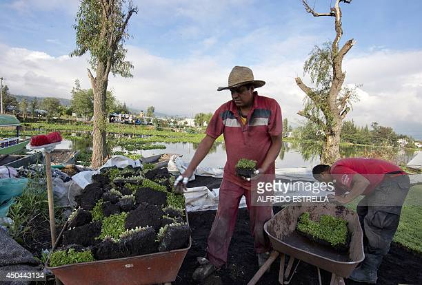 Two Mexican farmers work on their plot in a chinampa a floating artificial island created on lakes at the natural reserve Xochimilco in Mexico City...