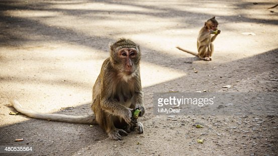 Two monkeys are eating a fruit on the street. : Stock Photo