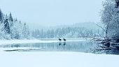 Two mooses crossing the lake Selbu in Norway