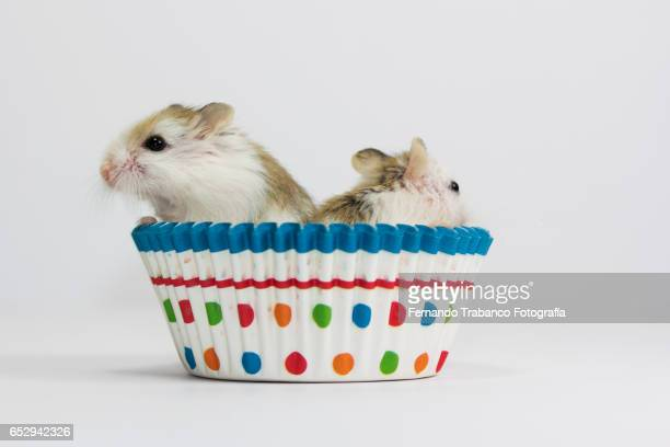 two Mouses eats a cupcake