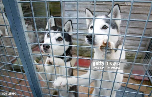 Dog Kennels Hythe Southampton
