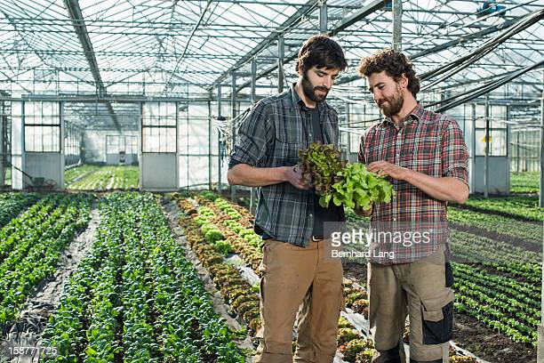 Two organic farmers in a greenhouse
