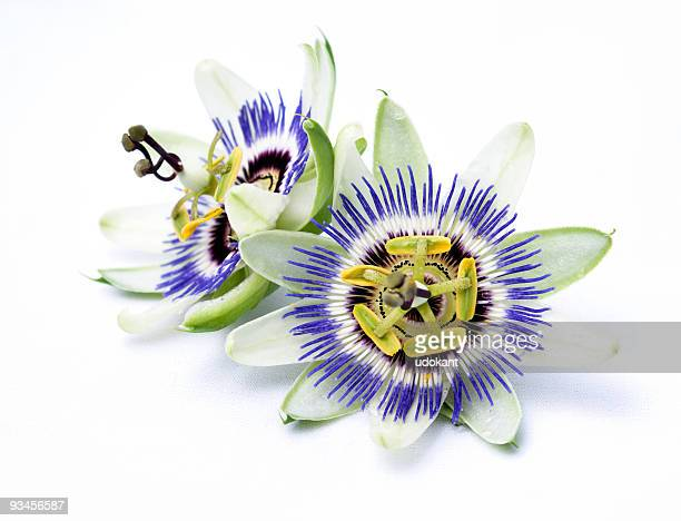 Two Passion Flowers