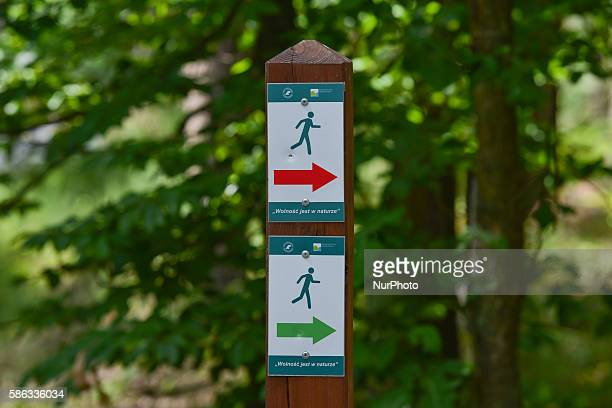 Two paths for runners and walkers 'freedom is in the nature' in Bor forest in Krakow Poland on August 5 2016 The nature reserve 'Bor' is located near...