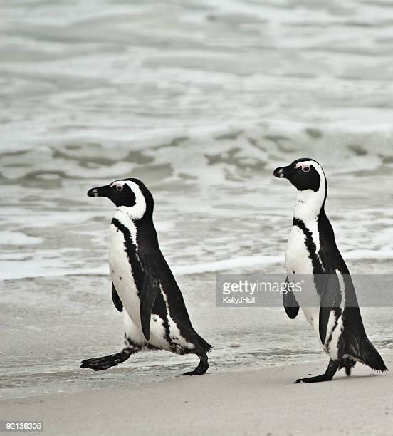 Two penguins walking down the beach
