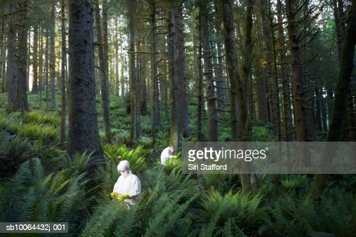 Two people examining in forest