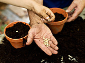 Two people holding seeds, close up of hands