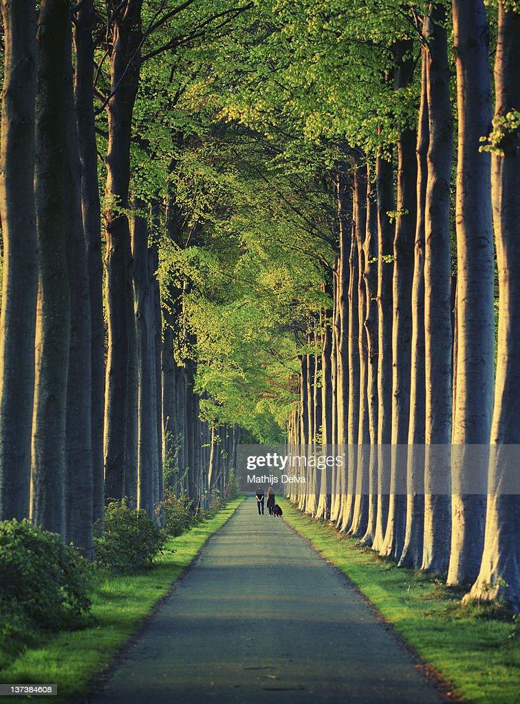 Two people walking on lane greenery around