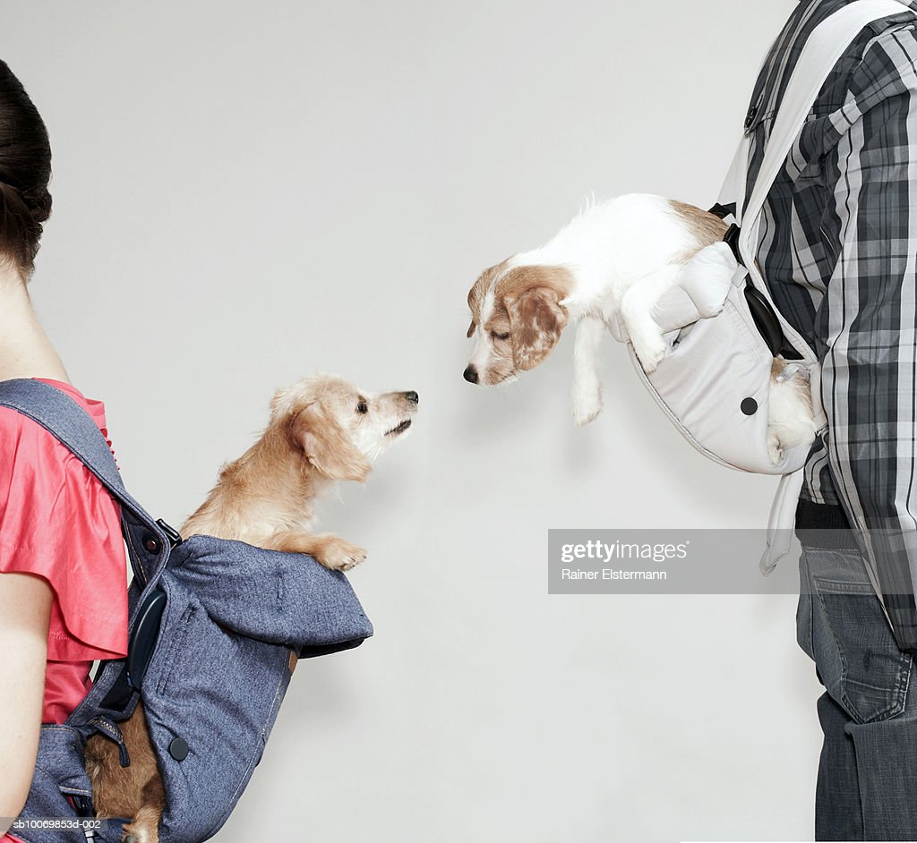 Two people with dogs in baby slings, side view, studio shot : Stock Photo