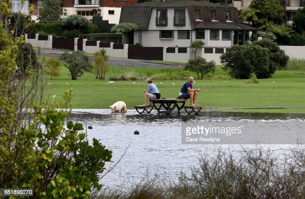Two people with their dog sit on a flooded picnic table in Onepoto Domain on March 11 2017 in Auckland New Zealand The Tasman tempest weather system...