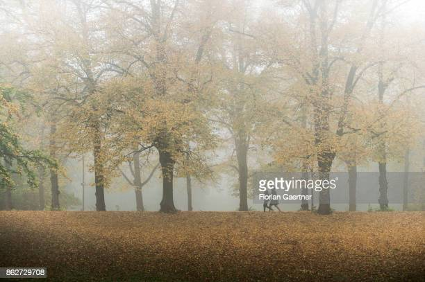 Two person walk along an alley in the foggy morning on October 18 2017 in Berlin Germany