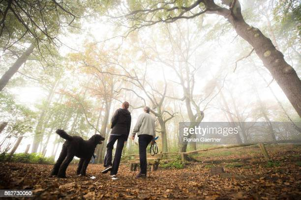 Two persons and a dog walk in the foggy morning near lake Grunewaldsee on October 18 2017 in Berlin Germany