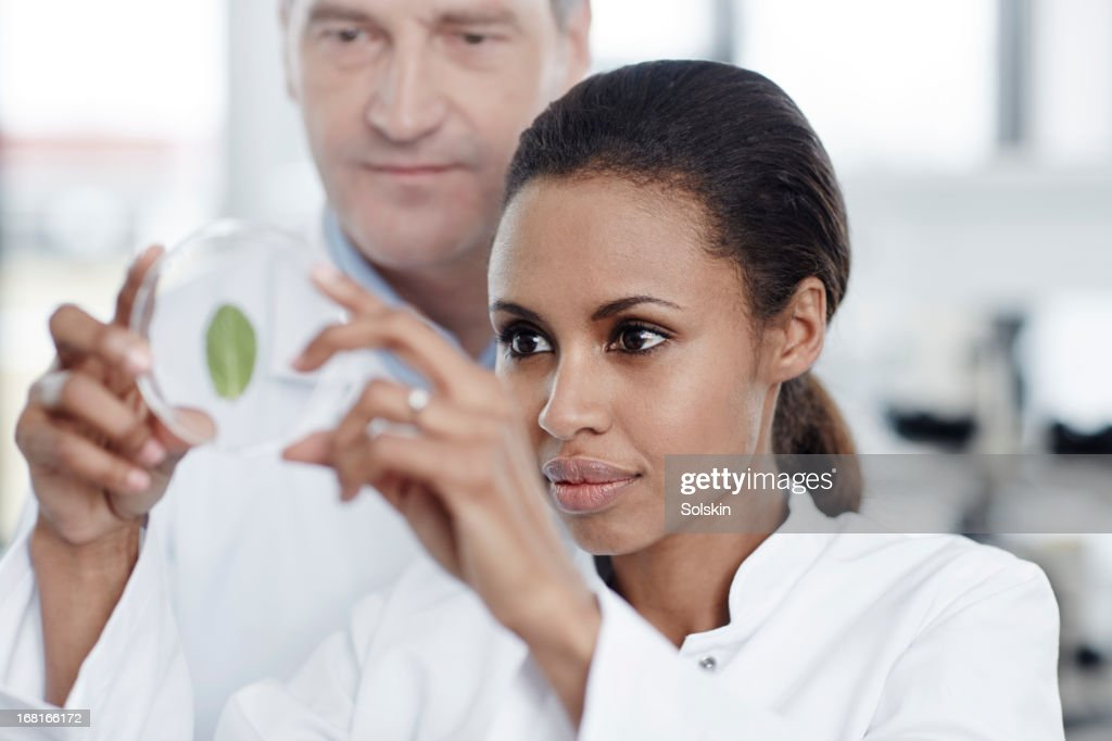 Two persons examining a green leaf in laboratory : Stock Photo