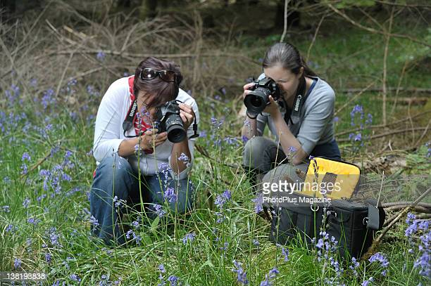 Two photographers taking pictures of bluebells in the Forest of Dean taken on May 31 2011
