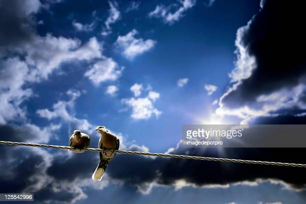 Two Pigeon on wire over cloudy sky