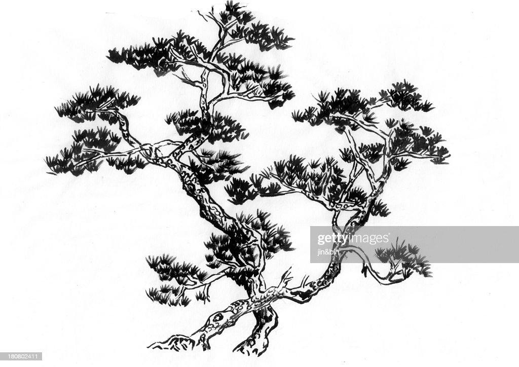 Two pine trees : Stock Photo