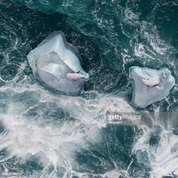 Two polar bears on top of icebergs