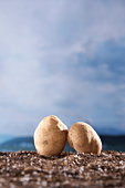 Two Potatoes on Ground