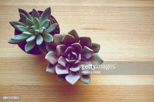 Two potted succulent plants viewed from above