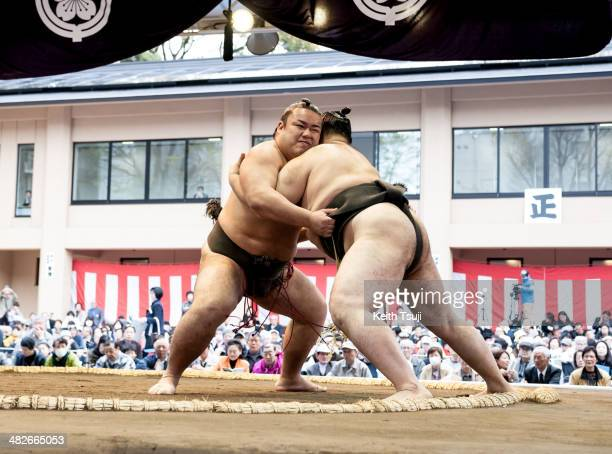 Question arm championship midget pro sumo wrestling