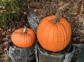 Two pumpkins close up