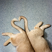 Two puppy tails in heart shape