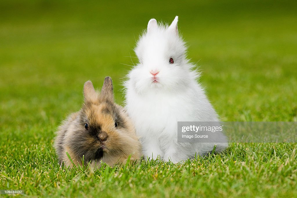 Two rabbits sitting on grass : Stock Photo