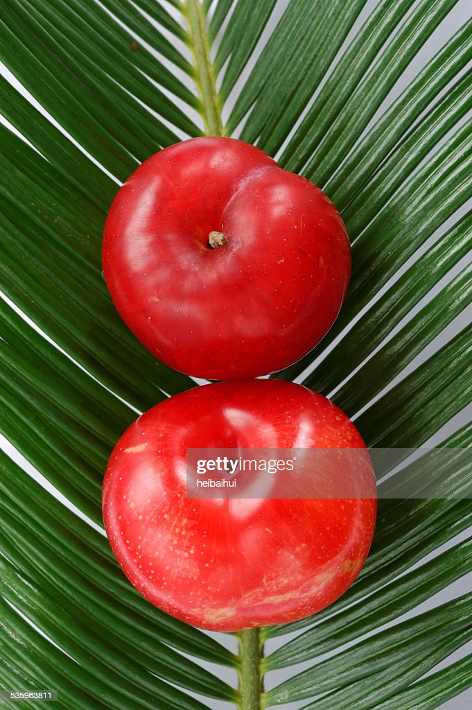 Two red plums over cycas leaves : Stock Photo