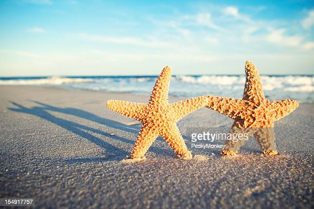 Two Romantic Starfish Holding Hands on Tropical Sunset Beach
