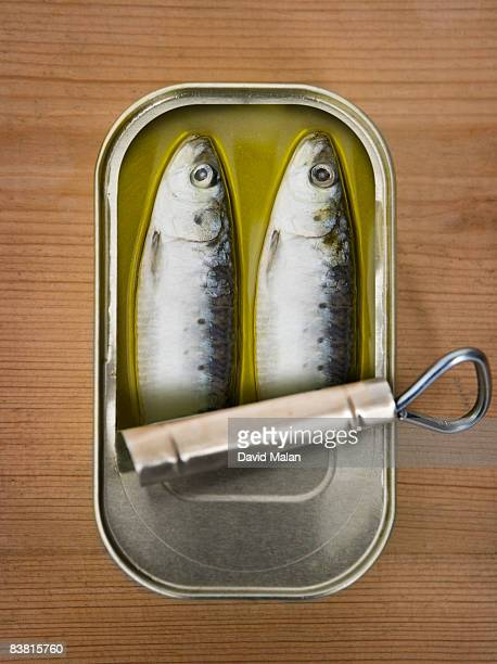 Two sardines in a tin