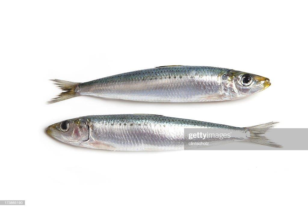 Two Sardines