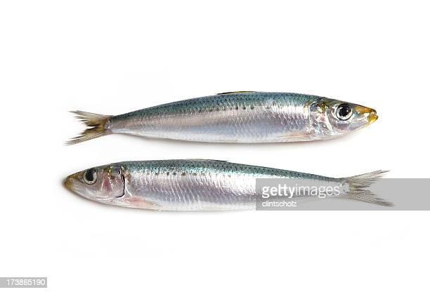 Deux des Sardines