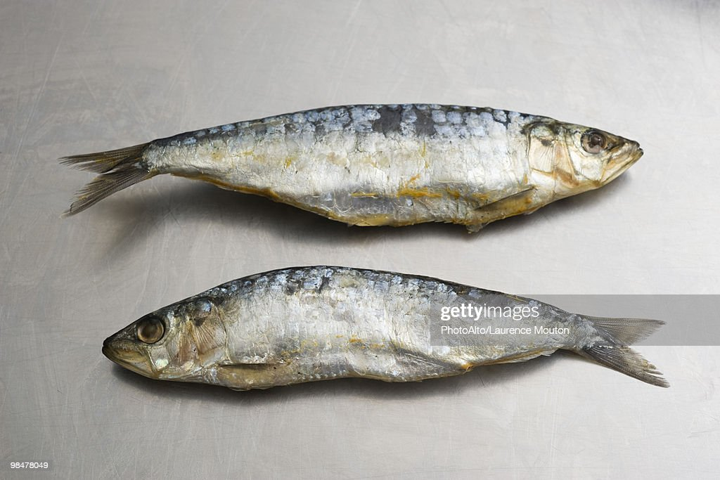 Two sardines : Stock Photo