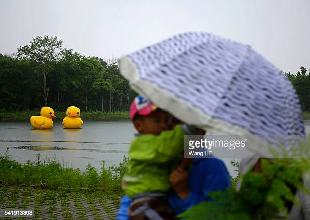 Two scaled replica of the rubber duck by Dutch conceptual artist Florentijn Hofman is seen floating on a lake in the national park£¬Yichun on June...