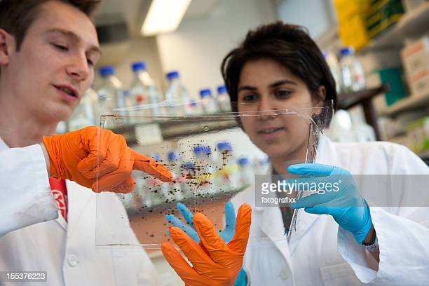 two scientists in lab discussing about results of a DNA-test
