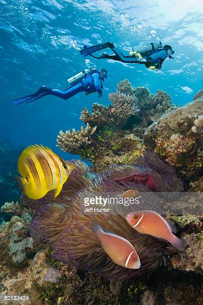 Two Scuba Divers on Great Barrier Reef