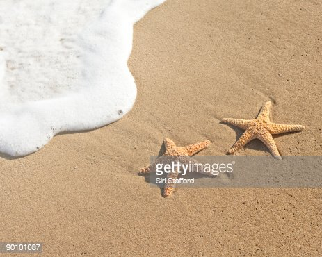 Two sea stars on sand by water : Stock Photo