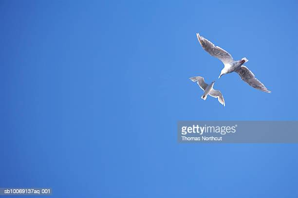 Two seagulls and blue sky