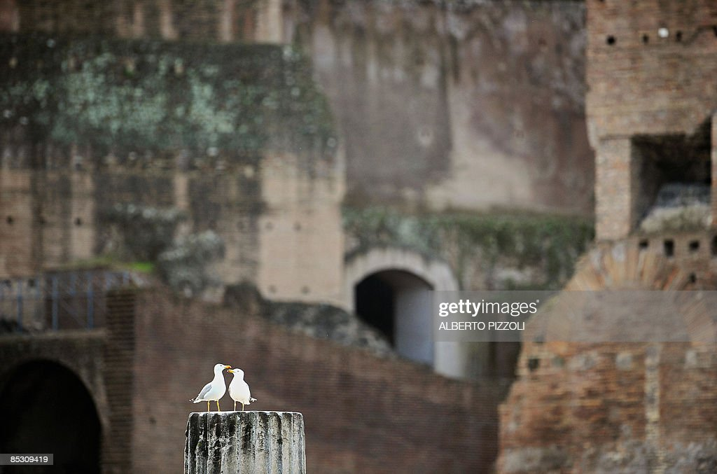 Two seagulls stand on an ancient pillar in the Roman forum in Rome on March 9, 2009.