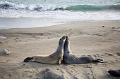 Two seals on a beach