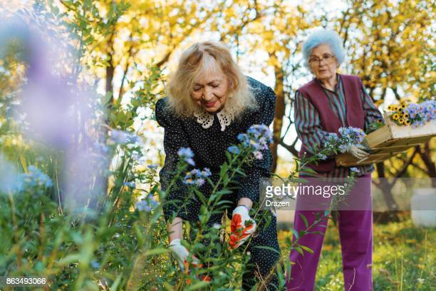 Two senior women enjoying gardening