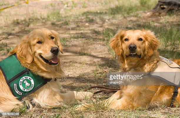 Two Service Therapy Dogs