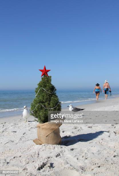 Two shore birds near a real Christmas tree at the beach