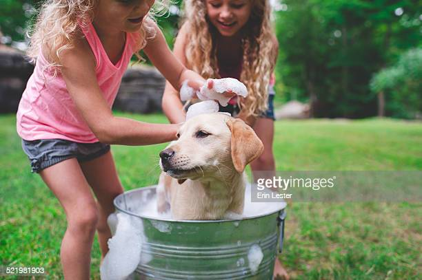 Two sisters bathing pet Labrador Retriever puppy