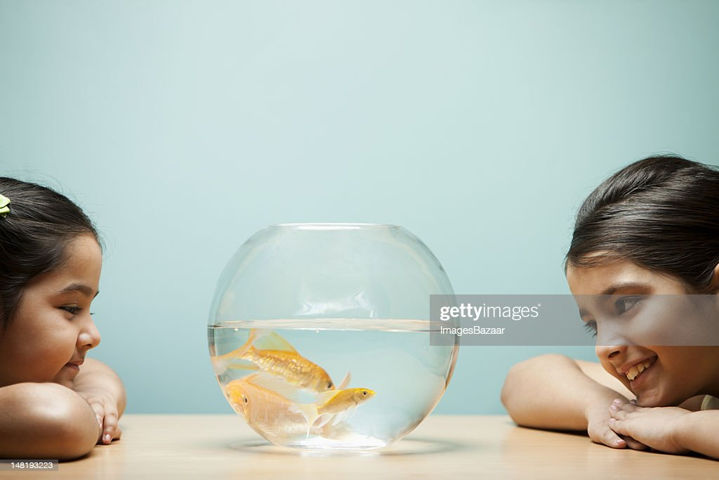 Two sisters (6-11) looking at goldfish in bowl : Stock Photo